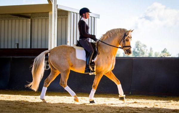 Dynamik Stallions