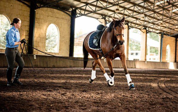Shelley Appleton<br/>Appleway Performance Horses